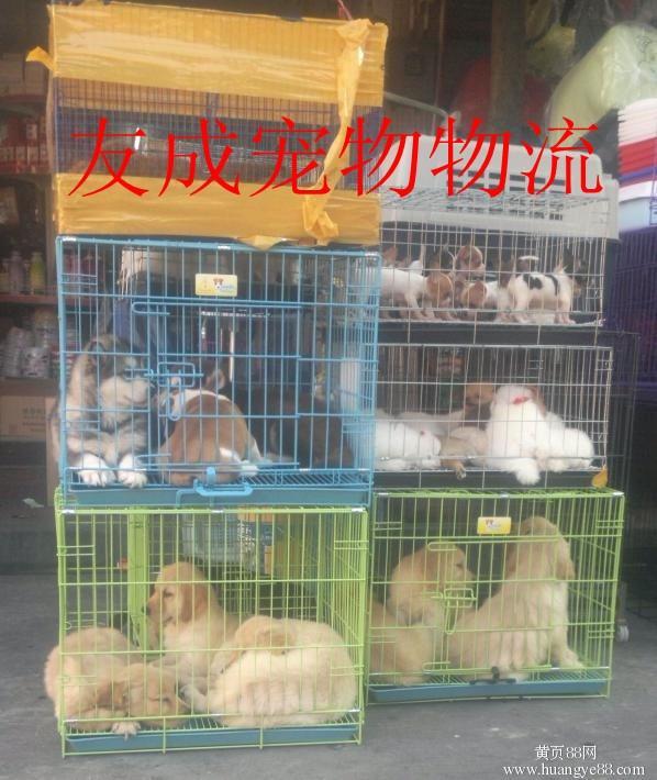 供应办理宠物出国的宠物托运公司电话