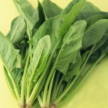 供应新鲜蔬菜