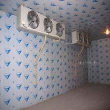 供应涡阳苔干制品冷藏贮存库盛雪专供批发