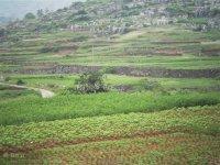供应南方中药材种子图片