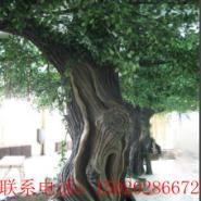 济南长清区假树作品图片