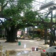 榕树制作水泥榕树制作室内榕树制作图片