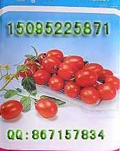 供应千禧樱桃西红柿种子种苗图片