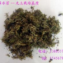 供应苔藓水苔栽培基质、水草、青苔、批发