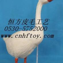 供应鸟类标本,裘皮动物