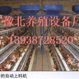 供应鸡用自动上料机