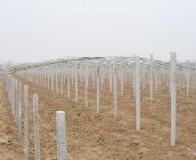 供应大棚水泥立柱,阳棚立柱,温暖棚立柱,葡萄架柱子,围山围栏柱子