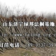 供应山东法桐选济宁李营法桐苗木基地批发