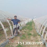供应湖南大棚种植/蔬菜大棚骨架、温室大棚、大棚支架机图片
