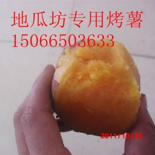 地窖保鲜常年供货138龙薯九烟25图片