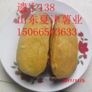 四川成都泸州绵阳宜宾专用地瓜品种图片
