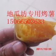 烟薯25号商品地瓜-地瓜种-地瓜苗图片