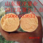 7月18号出土的龙薯九图片