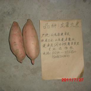长春龙薯九号地瓜图片