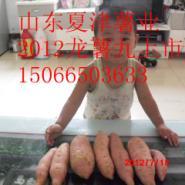 鲁西北最大红薯基地红薯图片