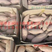邯郸地区专供龙薯九号地瓜图片