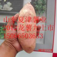 济南专供龙薯九号地瓜图片