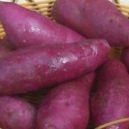 济黑一号紫薯量大优惠图片