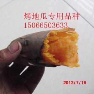 烟台蜜薯甜度高香甜可口图片