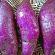 济黑一号紫薯大量供应图片