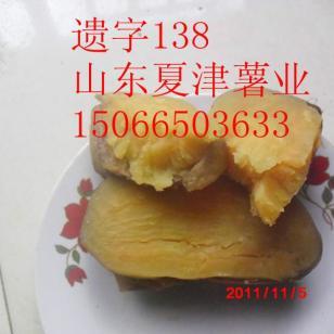 烟薯25电烤专用遗字138龙薯九图片