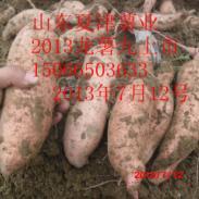 龙薯九图片