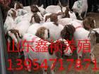 波尔山羊养殖技术视频图片