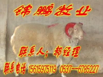 小尾寒羊的生长发育特性