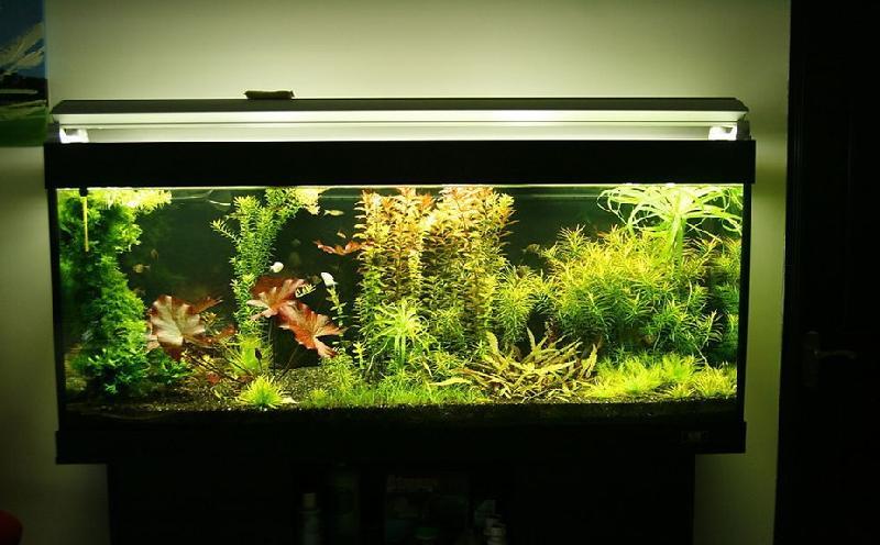 合肥生态鱼缸哪家好图片 高清图片