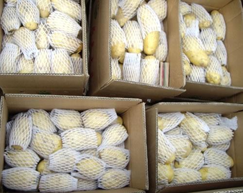 新鲜荷兰土豆图片大全图片