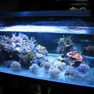 山东金晶汽车级超白玻璃鱼缸图片