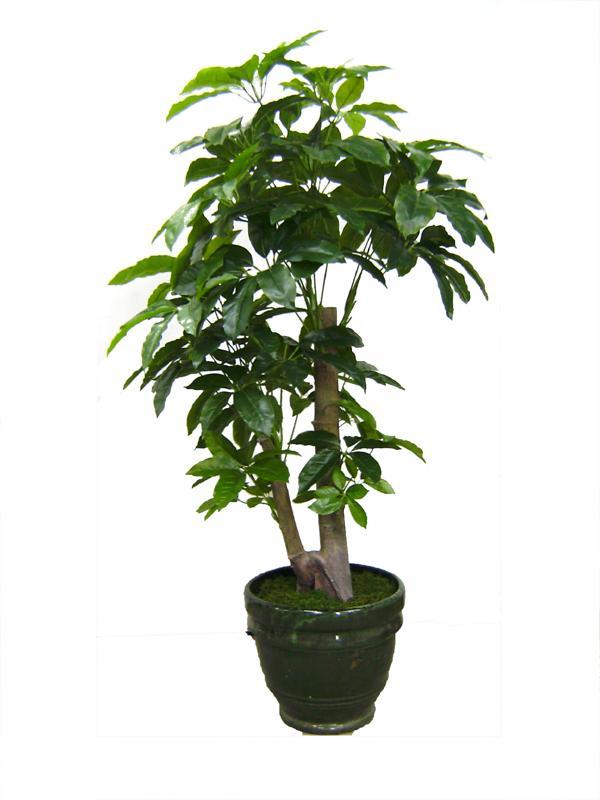 开网店如何找货源_发财树_发财树装饰画_发财树的图片_淘宝助理