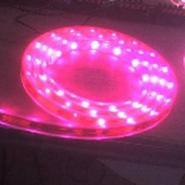 LED3528红光30灯不防水灯条图片