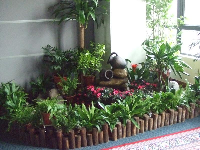 室内植物租摆养护图片图片