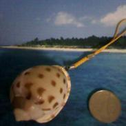 天然海螺贝壳手机挂链挂件饰品图片