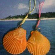 贝壳挂件批发/海螺饰品图片