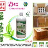 广东EM菌液在果木上的使用方法图片