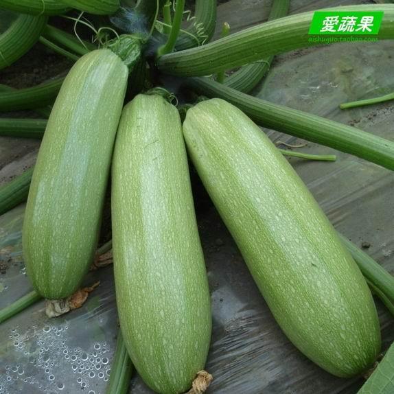 蔬菜名称和图片大全图片大全 蔬菜大全设计图 蔬菜 生物世图片