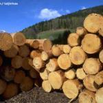 木材进口代理报价