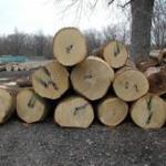 东莞木材进口报关代理报价
