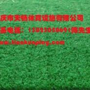 重庆荣昌哪里有人造草坪出售图片