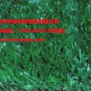 重庆沙坪坝区人造草坪报价图片