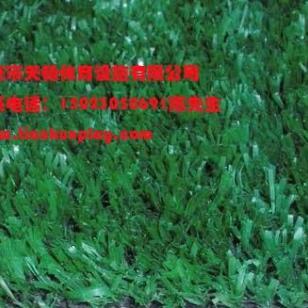 重庆江津区哪里有人造草坪出售图片