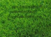 重庆人造草坪厂家咨询电话,贵阳人造草丝市场价格圈,四川地产围墙装饰草坪厂家