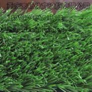 重庆塑料人造草坪哪里有卖图片