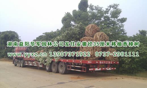 湖南益阳华军园林有限公司