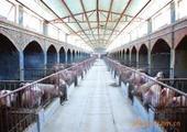 供应猪舍温控专用设备