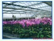 绿色环保蔬菜花卉大棚调温锅炉图片