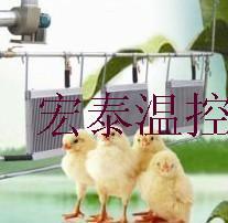 供应蔬菜花卉瓜果种苗调温锅炉