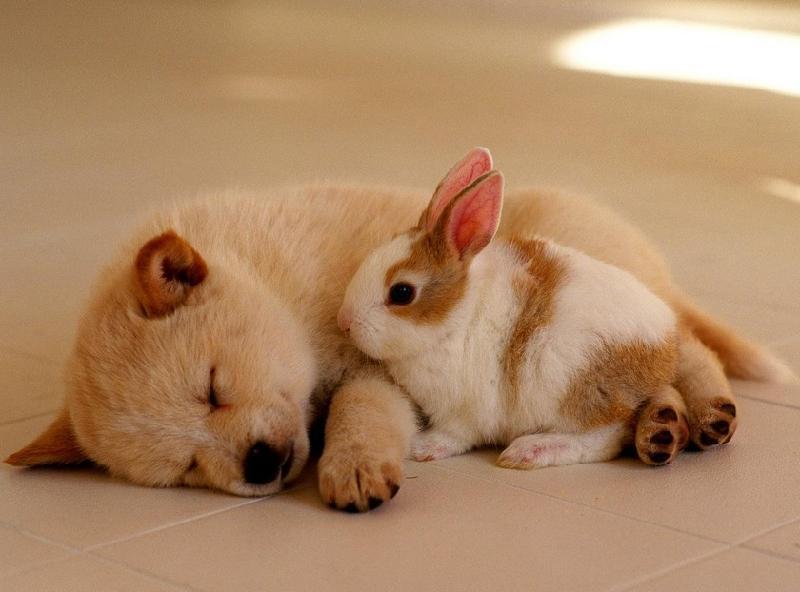 江苏常州美多格宠物会所生产供应常州宠物美容为宠物